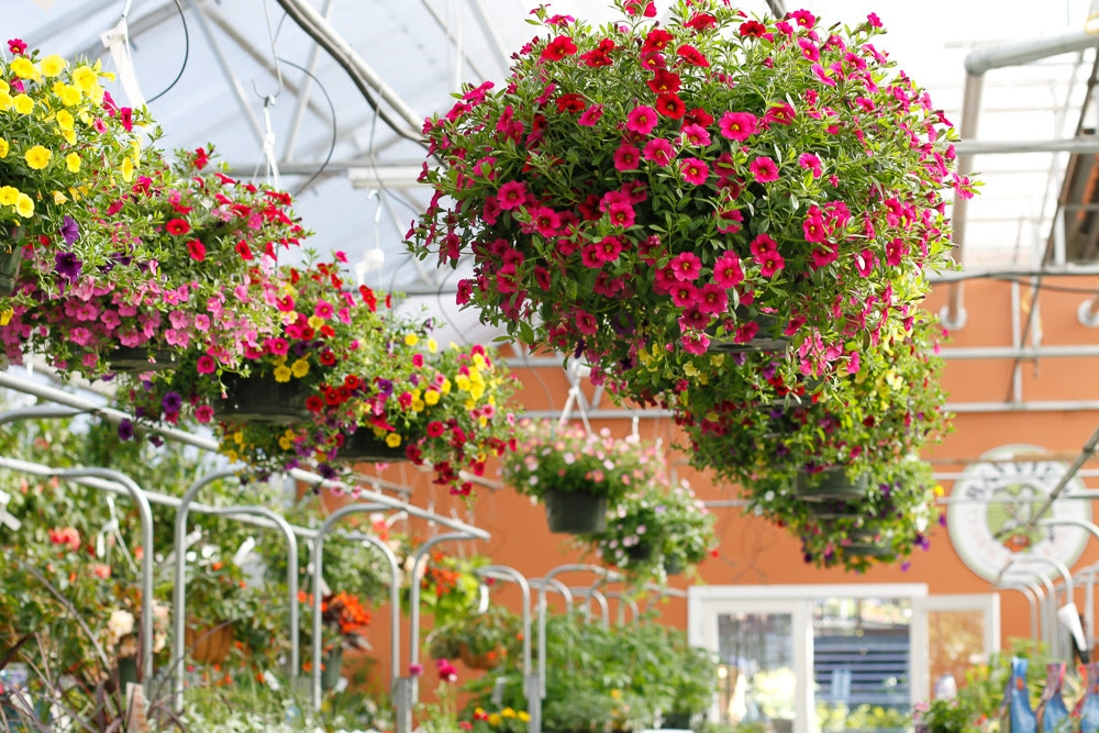Who Has Hanging Flower Baskets On Sale : Classes events sales and specials happening now at